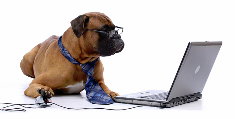 dog-computer-working